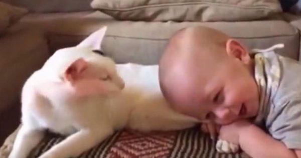 Μαμά βλέπει το μωρό της να αρπάζει τα πόδια της γάτας. Αυτό που καταγράφει στο βίντεο γίνεται αμέσως viral!