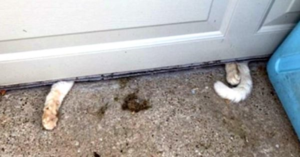 Οι διασώστες ζώων καταφτάνουν στο σπίτι μετά από καταγγελία! Όταν άνοιξαν την πόρτα σοκαρισμένοι αντίκρισαν…