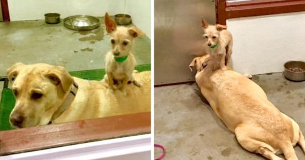 Αδέσποτος σκύλος δεν ξεκολλάει από τον φίλο του σε καταφύγιο για να υιοθετηθούν μαζί