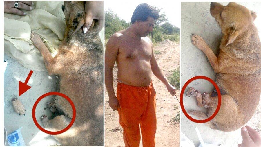 κακοποίηση σκύλου κακοποίηση ζώων κακοποίηση