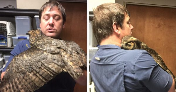 Video: κουκουβάγια αναγνωρίζει τον άνδρα που την έσωσε και τον αγκαλιάζει εγκάρδια