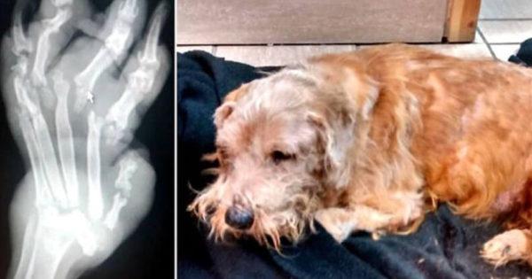 Ένα εγκαταλελειμμένο σκυλί βρέθηκε σε ένα νεκροταφείο τραυματισμένο και δεν μπορούσε να κουνηθεί! Αυτό που σοκάρει όμως είναι…