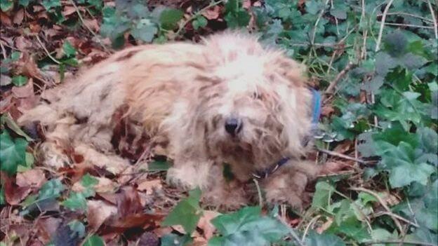τραυματισμένο σκύλο τραυματισμένο σκυλί