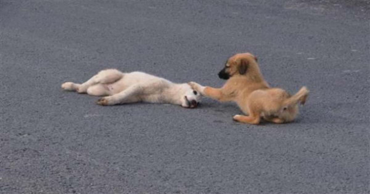 Σκύλος αφοσίωση