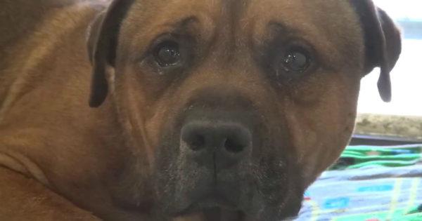 Σκυλάκος εγκαταλείπεται σε καταφύγιο – Το σπαρακτικό κλάμα του ραγίζει καρδιές (βίντεο)