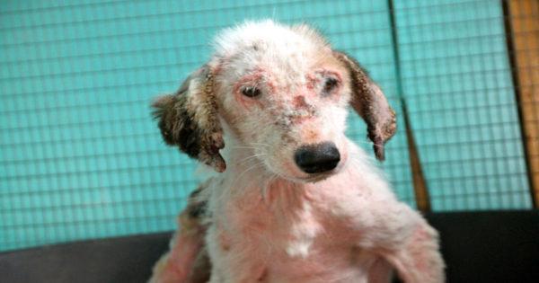 Ένα συγκλονιστικό βίντεο καταγράφει τη μεταμόρφωση μιας σκυλίτσας που είχε ψώρα