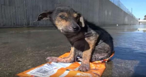 ΑΙΣΧΟΣ: Πέταξαν σκυλάκι από 9 μέτρα ύψος – Δείτε τη μεταμόρφωσή του (βίντεο)
