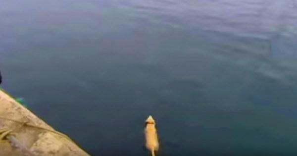 Κάθε πρωί έχανε τον σκύλο του για ώρες. Μια μέρα όμως τον βλέπει να βουτάει στη θάλασσα και ανακαλύπτει το μυστικό του!