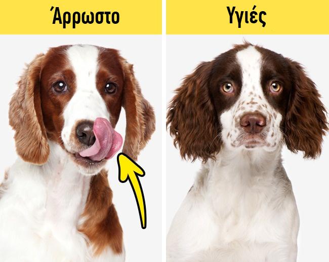 Σκύλος κτηνίατρος Γάτα