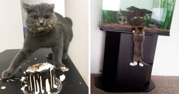 40 αστείες στιγμές κατοικίδιων ζώων που πιάστηκαν στα πράσα