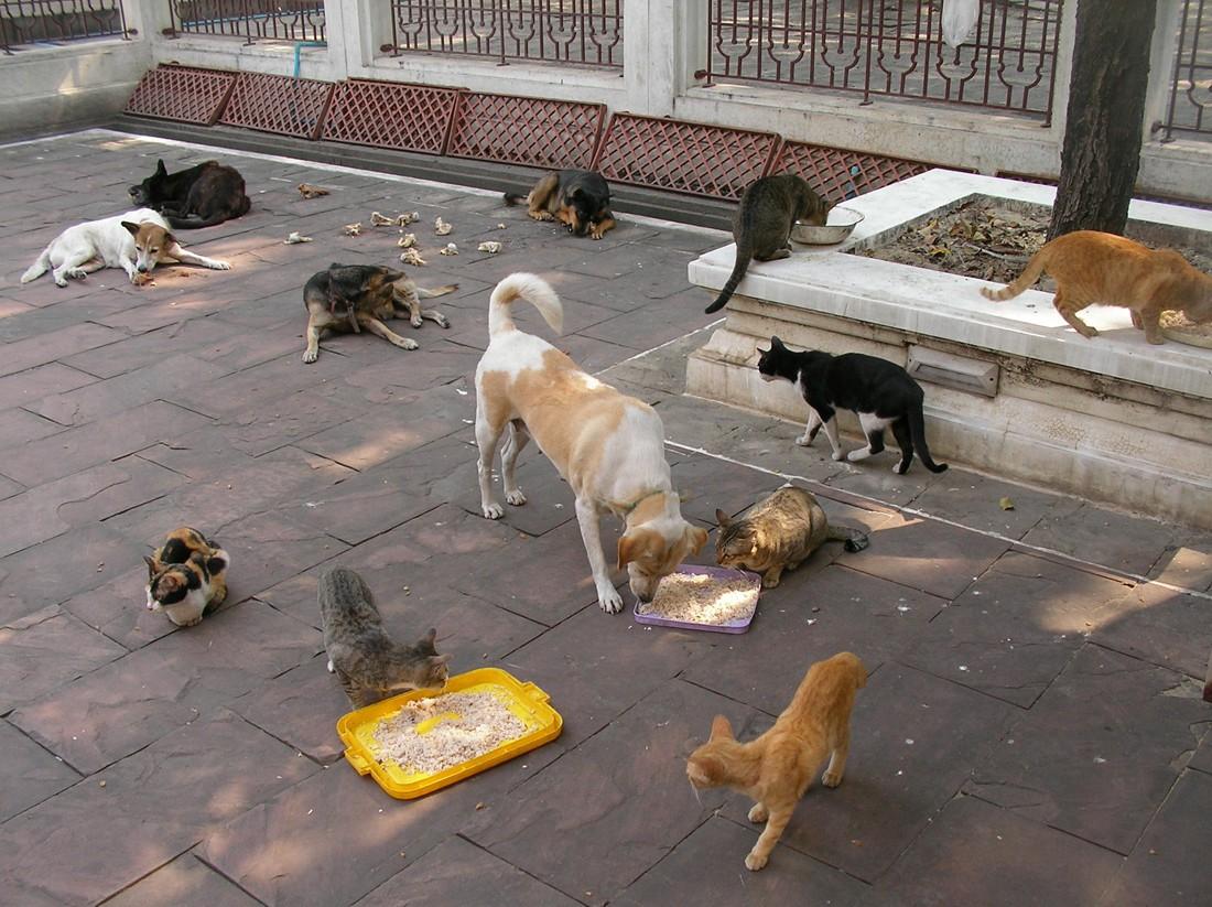 λαοί που αγαπούν τα ζώα ζώα