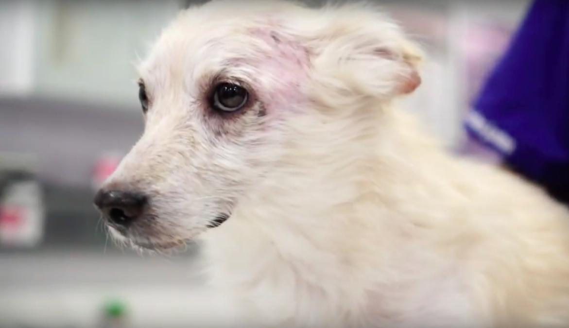 Σκύλος σκυλιά άρρωστο σκυλί