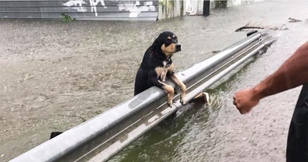 Χιούστον τυφώνας Χάρβεϊ