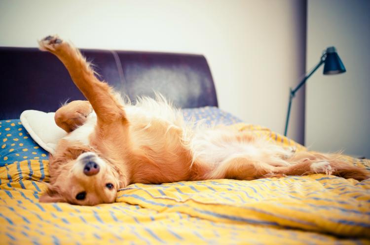 Σκύλος γλύψιμο σκύλου γλύψιμο