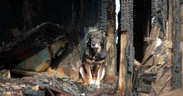 Υιοθετήθηκε το πρώτο αδέσποτο σκυλάκι από τη φωτιά στην Αττική