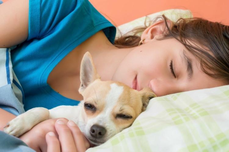 Σκύλος σάλιο σκύλου γλύψιμο σκύλου