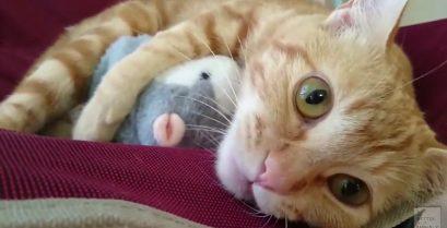 Το αγαπημένο παιχνίδι της γάτας
