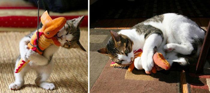 Σκύλος σκύλοι με τα παιχνίδια τους σκύλοι παχνιδάκια παιχνίδι ζωάκια ζώα γάτες με τα παιχνίδια τους γάτες Γάτα