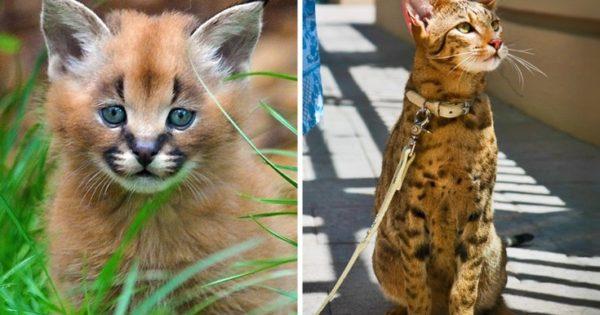 Οι δέκα πιο ακριβές γάτες του πλανήτη