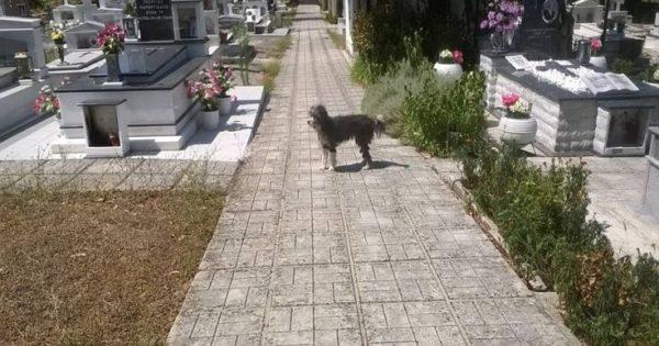 Σκύλος μένει στο νεκροταφείο περιμένοντας το αφεντικό του