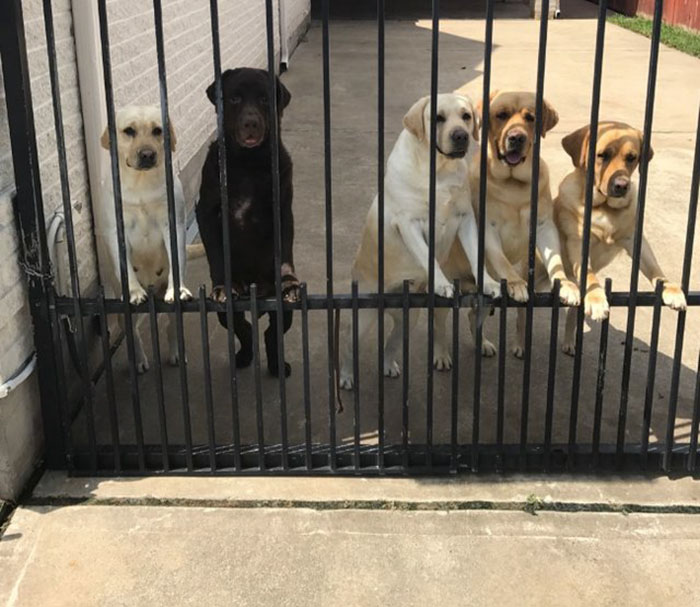 Θα λιώσετε: Ταχυδρόμος παίζει με τα σκυλιά ιδιοκτητών που λείπουν διακοπές (vid)