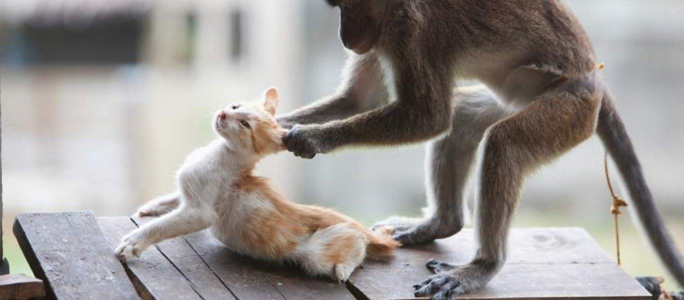 σκύλοι σκυλιά μαϊμούδες γάτες Βίντεο