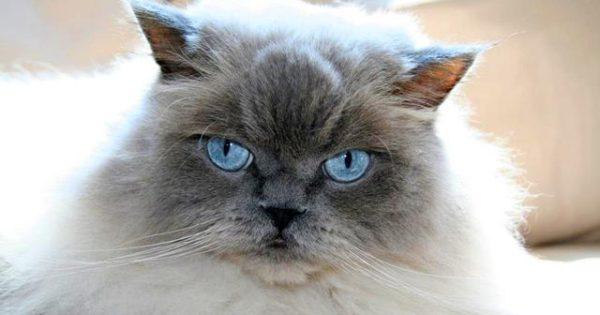 Η γάτα μου μαδάει – Τι πρέπει να κάνω;