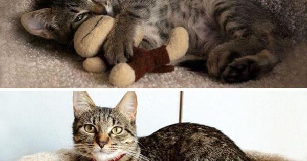 Δείτε 10 ζωάκια που μεγαλώνουν μαζί με τα παιχνιδάκια τους