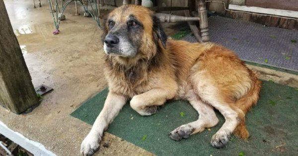 ΗΠΑ: Συγκινεί ο σκύλος-σύμβολο της επιβίωσης από την καταιγίδα Χάρβεϊ (pics)