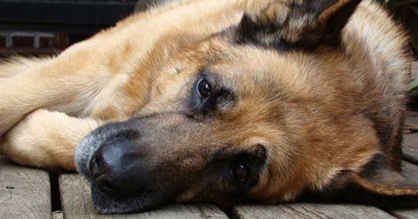 Επιληψία στους σκύλους: Όσα πρέπει να γνωρίζετε!