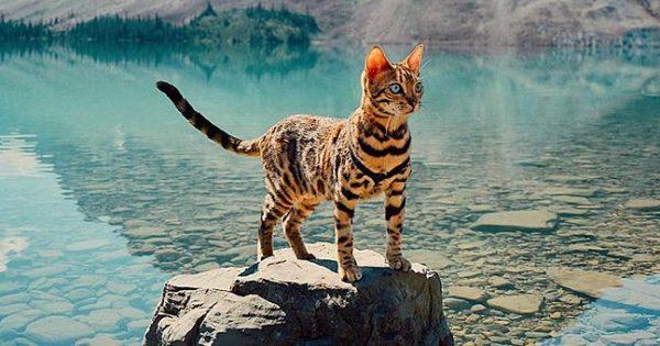 Αυτή η γάτα ζει πιο συναρπαστικά από σένα