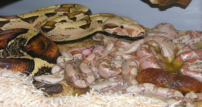 φίδι Βίντεο