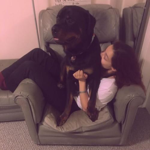 μεγαλόσωμοι σκύλοι μεγαλόσωμα σκυλιά