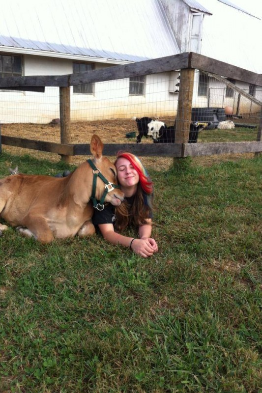 χορτοφάγοι θηλαστικά αγελάδες αγελάδα