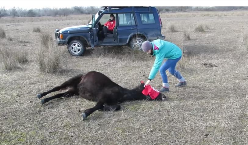 κτηνίατρος άλογο