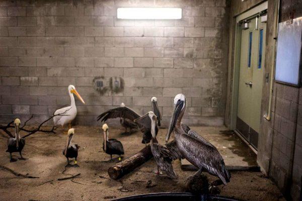 φύλαξη ζώων τυφώνας ίρμα τυφώνας προστασία ζώων ίρμα ζώα