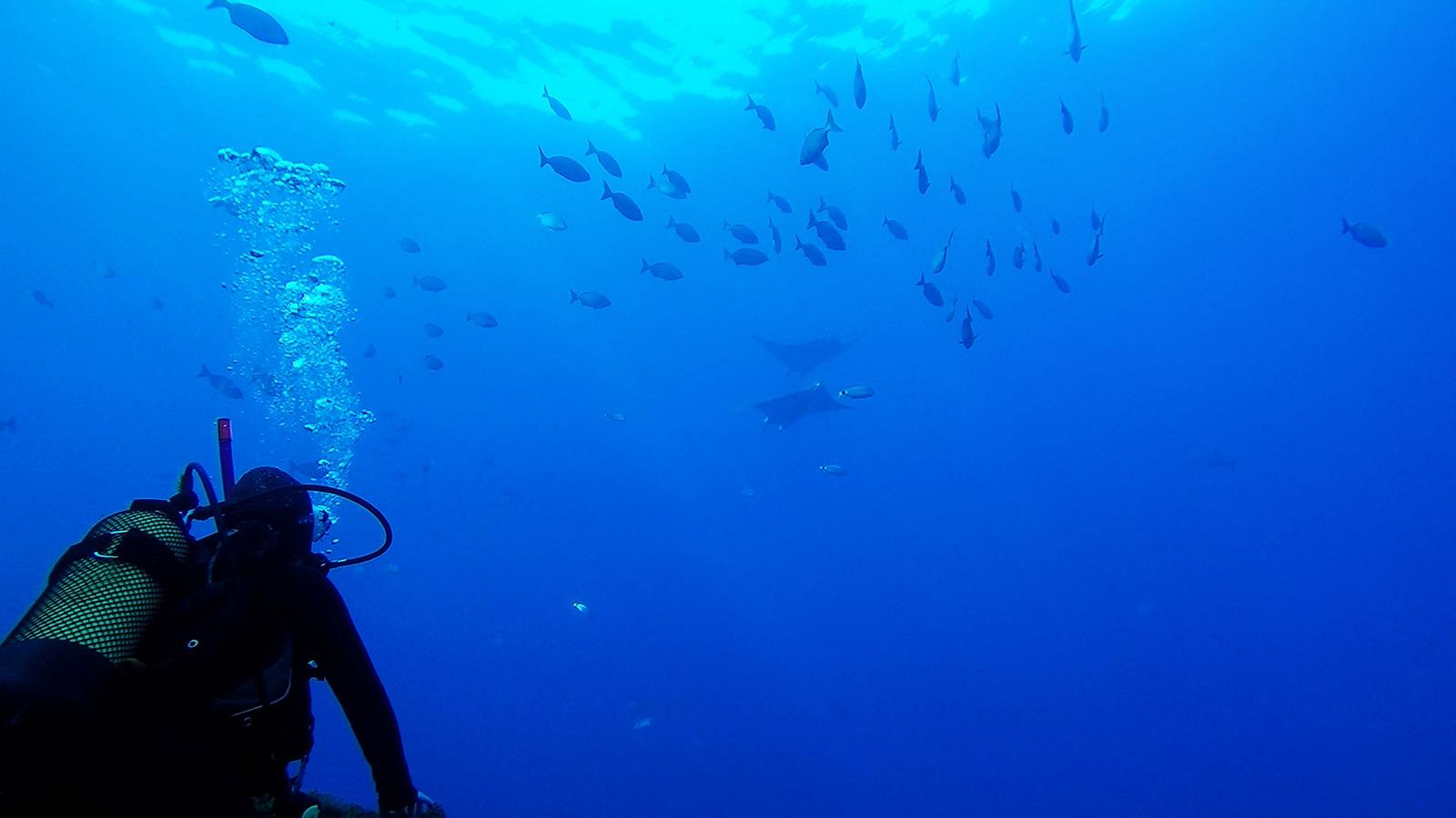 ψάρια μοβούλη θάλασσα εντόπισε περίεργο σμήνος