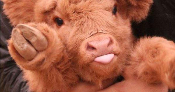20 συγκλονιστικές φωτογραφίες που μόλις τις δείτε θα θελήσετε να γίνετε χορτοφάγοι!