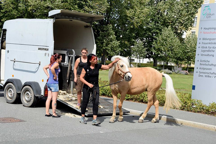 ετοιμοθάνατη άλογο άλογα