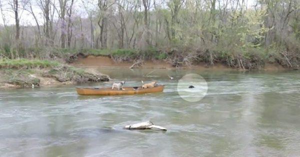 Δύο σκυλιά που εγκαταλείφθηκαν σε βάρκα φωνάζουν απελπισμένα για βοήθεια όταν ένα απρόσμενο «πλάσμα» εμφανίζεται και κινείται προς το μέρος τους