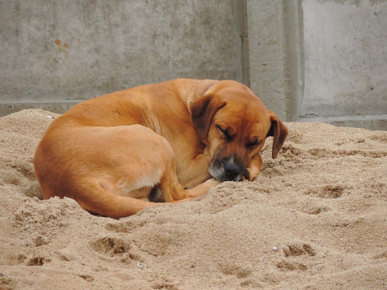ύπνος σκύλου στάση ύπνου Σκύλος