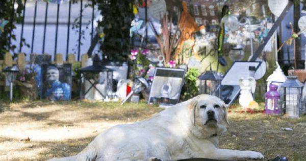 H σκυλίτσα του George Michael ακόμα πενθεί