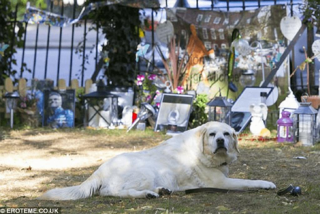 Σκύλος George Michael