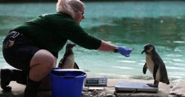 Πώς ζυγίζουν τα ζώα στους ζωολογικούς κήπους; (video)