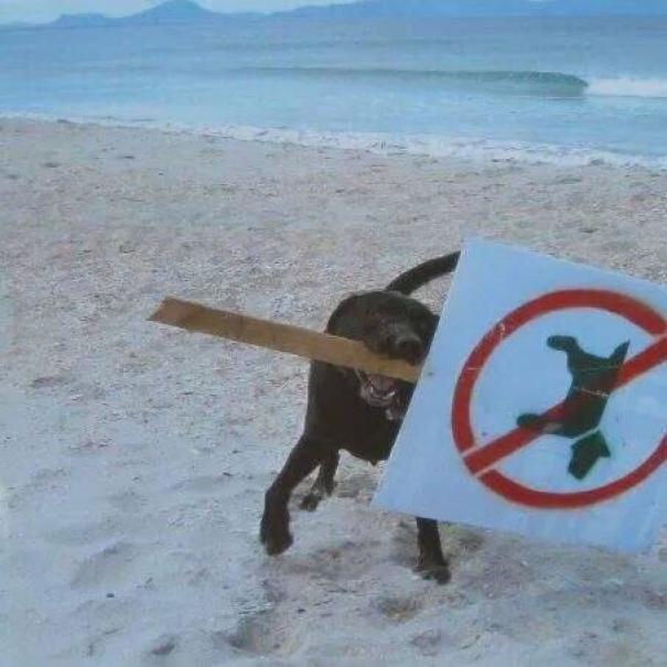 κανόνες ζώων ζώα