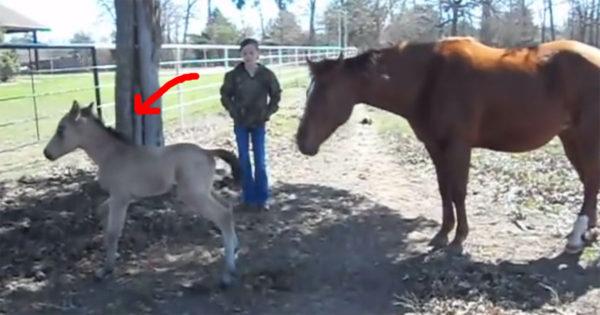 Το μωρό άλογο ήταν δίπλα στη μαμά του, όταν φτερνίστηκε ξαφνικά. Η αντίδρασή του; Θα σας φτιάξει τη μέρα!
