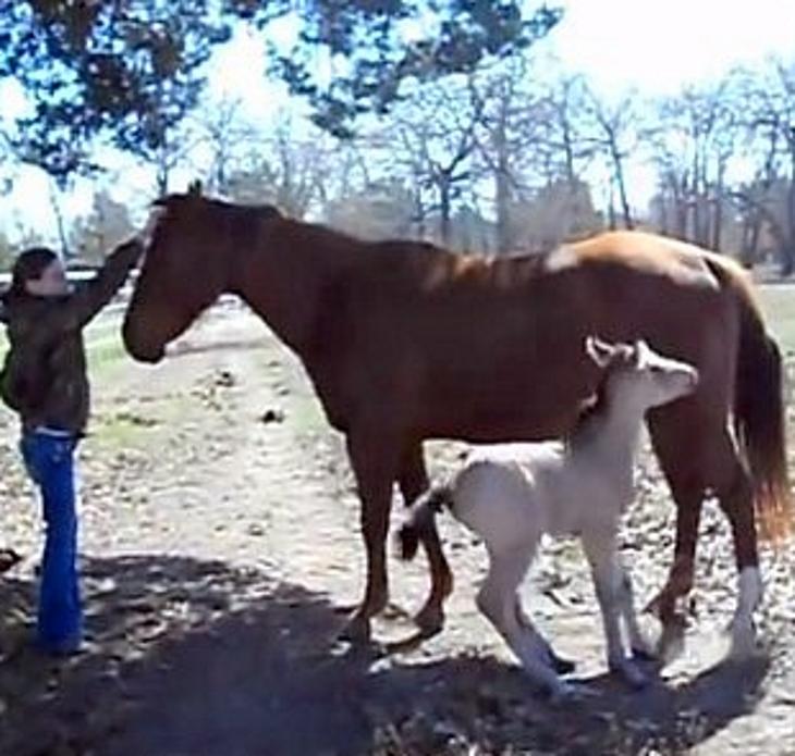 μωρό άλογο άλογο