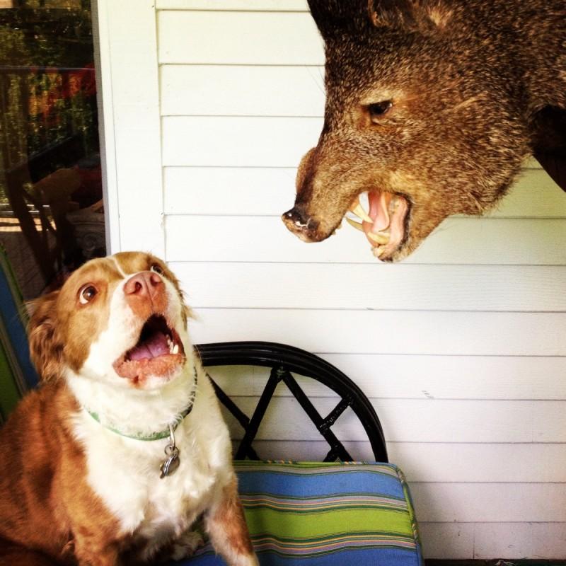 Σκύλος σκύλοι