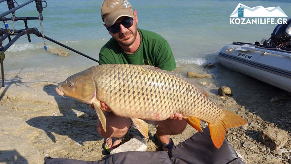 ψάρι τεράστιος κυπρίνος κυπρίνος