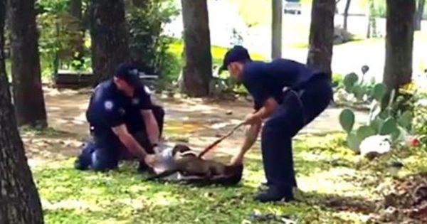 Όταν είδαμε τους αστυνομικούς να ακινητοποιούν τον σκύλο, παγώσαμε. Μόλις όμως η κάμερα έκανε κοντινό ΖΟΥΜ; Μείναμε άφωνοι!